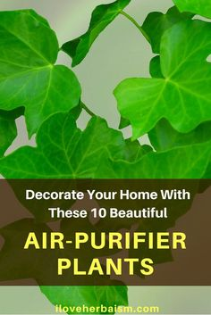 How wonderful it is to naturally purify air. These plants are not only acting as an air-purifier but also become very beautiful home decorating items.