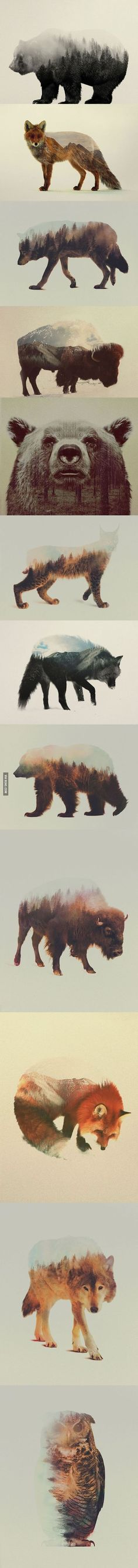 Double Exposure Portraits of Animals Reflecting Their Habitat by Andreas Lie.  I just love this Idea!: