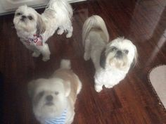 Three's Company shared by owner, Judy!