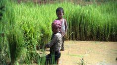 Photo: Child labour on family farms Credit: FAO/J. Thompson