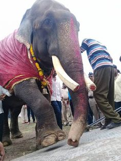 LOBO REPÓRTER: Elefante é resgatado depois de mais de 50 anos em ...