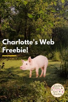 A freebie for the classic novel Charlotte's Web.