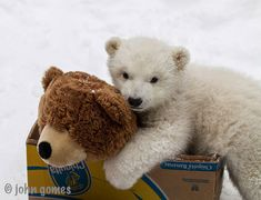 Oh, that? It's Kali the orphaned baby polar bear and his best friend.