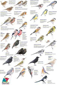 Les oiseaux de nos jardins. En janvier et février 2020