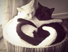 Racism Is A Human Problem love cute animals cat cats heart adorable animal kittens pets kitten funny animals racisim I Love Cats, Crazy Cats, Cute Cats, Funny Cats, Adorable Kittens, Baby Animals, Funny Animals, Cute Animals, Wild Animals