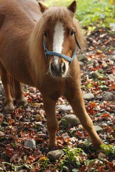 Dakota Jack  my mini pony