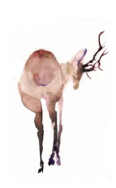 deer water color