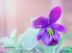 Hey, I found this really awesome Etsy listing at https://www.etsy.com/listing/233416520/nature-print-flower-wall-art-purple