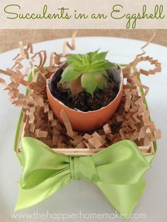 succulents in an eggshell