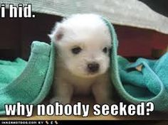 funny puppies - Google Search