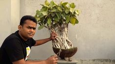 How to transfer Big tob to Bonsai pot Ficus Banyan Bonsai for Beginner: Bonsai Garden, Ficus, Cool Pictures, Channel, Plants, Big, Gallery, Youtube, News