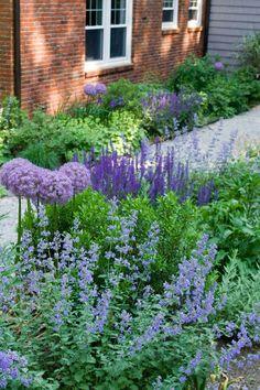 Alliums, Nepeta Catmint, Sage - Love it! purple garden via contemporary landscape by Matthew Cunningham Landscape Design