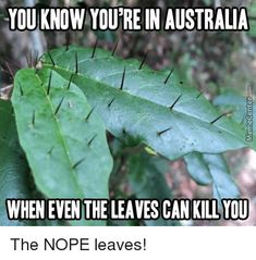 Make a short link with an expiry date. Scary Funny, Stupid Funny Memes, Funny Tweets, Hilarious, Funny Humour, Creepy, Australia Meme, Australia Animals, Funny Images
