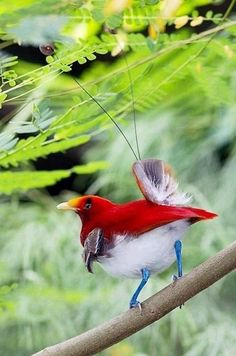 RED WHITE AND BLUE ALL ON ONE LITTLE BIRD. SO PRETTY. L.