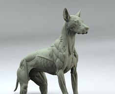 Lord is raising funds for Canine Anatomy Sculpture on Kickstarter! Canine Anatomy Sculpture in the spirit of the Animaliers of the Century. Great for reference, research or displayed as fine art. Dog Anatomy, Anatomy Poses, Muscle Anatomy, Animal Anatomy, Anatomy Drawing, Anatomy Sculpture, Dog Sculpture, Animal Sculptures, Animal Sketches