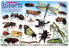 Bugs and Insects Theme for Preschool