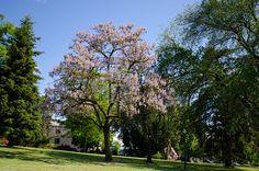 Photo of the Oregon State University campus