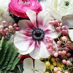 #floralphotography