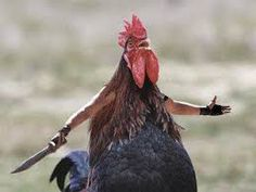 Image result for chicken with knife meme