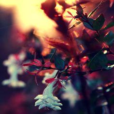 Photography inspiration #photo #photography