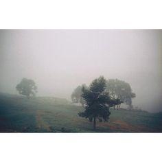 2002 Russia. Morning mist... #alinavlasova #alinavlasovaphotography #russia #memory #mist #tree #photograher #photo #photos #photoshoot #film #mood #all_shots #negative #color #analog
