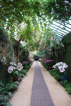 Le tunnel de verdure (Serres Royales de Laken -Bruxelles)   Flickr - Photo Sharing!