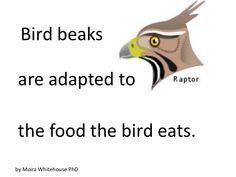 Bird beaks (teach)