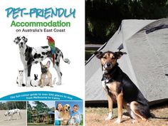 Pet-Friendly Accommodation on Australia's East Coast Review - Dog Adventures