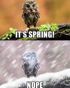 Get your laugh on to these 20 VERY Funny Spring Memes! Funny Owls, Funny Cute, The Funny, Funny Animals, Cute Animals, Wild Animals, Most Famous Memes, Meanwhile In Canada, Just For Laughs
