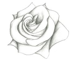 Pencil Sketches Of Rose Pencil Drawing Sketch Pencil Sketch Drawing