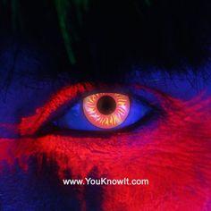 i-Glow Wolf Eye Contact Lenses (Pair) non-prescription