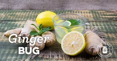 Homemade Ginger Bug Recipe - Cultures for Health