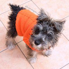 #knit: abrigo para perritoa!  Paso a paso en español :)