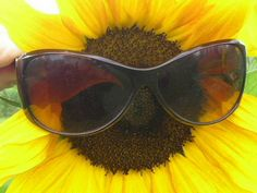 Funny Sunflower with Sunglasses