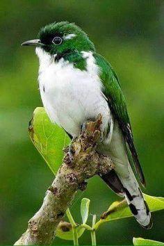 lindo verde e branco. - Ero Pereira - Google+