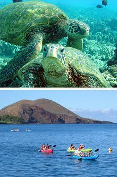 Maui Kayaks Trips | Makena Turtle Town Snorkel Eco Adventure