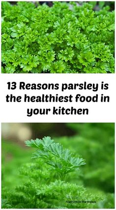 The many health benefits of parsley. Why it just might be the healthiest food in your kitchen.