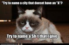 Grumpy cat jokes, grumpy cat funny, funny grumpy cat …For more hilarious humor… Grumpy Cat Quotes, Meme Grumpy Cat, Cat Jokes, Funny Cat Memes, Funny Shit, Funny Cats, Funny Animals, Funniest Animals, Hilarious Jokes