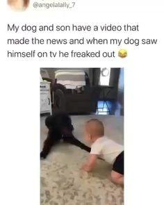 Cute Funny Dogs, Funny Dog Memes, Funny Dog Videos, Funny Animal Memes, Funny Animal Pictures, Cute Funny Animals, Cute Captions, Cute Animal Videos, Animal Jokes