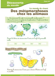 4 fiches destinées aux élèves de CE1 - CE2 pour travailler sur les animaux (déplacements, naissance, métamorphose) Kindergarten Science, Teaching Science, Science Activities, Science Projects For Kids, Science For Kids, Stem Science, Life Science, Teaching Schools, Effective Communication
