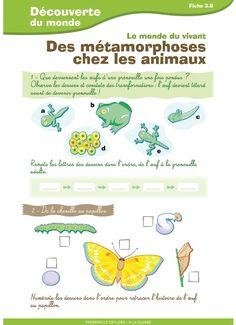 4 fiches destinées aux élèves de CE1 - CE2 pour travailler sur les animaux (déplacements, naissance, métamorphose)