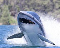 Shark Submersible