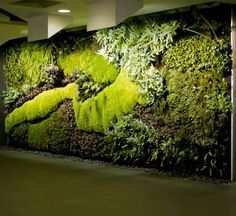 Vertical gardens by Mr. Green