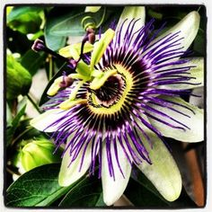 Check out my blog for details for where to buy all things Wealie, like this lovely Passionflower pic which can be ordered through instacanvas.