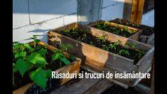 Seedlings and sowing tricks/ Răsaduri și trucuri de însămânțare Planting Seeds, Terrarium, Garden, Youtube, Plants, Terrariums, Garten, Lawn And Garden, Seed Starting