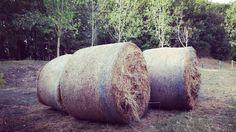 Son tutte balle!  #instalike #instafun #campagna #maneggio #fieno #natura #l4l #igersitalia #igerslivorno #igerstoscana #livorno #toscana #tuscany #tuscanypeople #fotografia #fotografiitaliani #funny #joke #soscemo #myshot