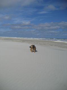 Palang, genietend van het strand