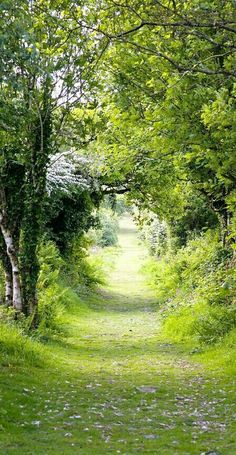a walk in the British countryside
