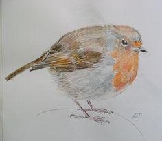 Sketchbook robin by Lisa Toppin.