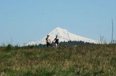 Powell Butte Nature Park in southeast Portland is 612 acres of forest and high grassland, with miles of hiking, mountain biking and equestrian trails that lead to spectacular views of the visible mountains of the Cascade Range. (Jamie Hale/The Oregonian) Portland Hikes, Downtown Portland, Portland Oregon, Mountain Bike Trails, Hiking Trails, Hiking Guide, Winter Hiking, City Limits, Forest Park